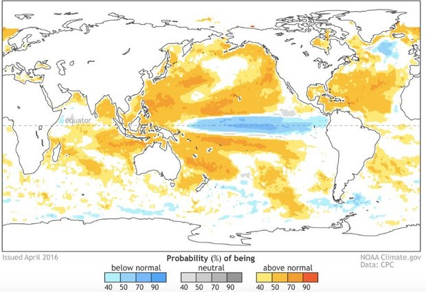 This is a sea surface temperature forecast from the North American Multi-Model Ensemble for September through November. Colder than average sea surface temperatures indicate La Nina development. (From Climate.gov/ CPC)